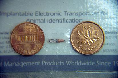 microchip between two pennies