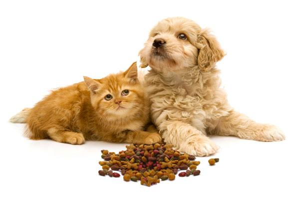 orange kitten and beige puppy with kibble