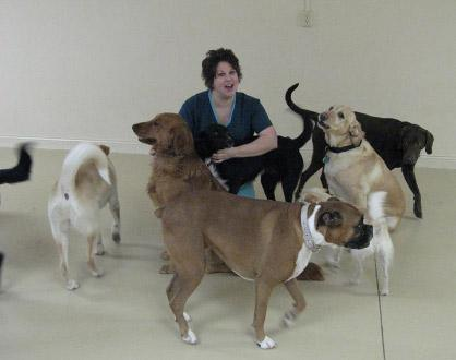 woman playing with room full of large dogs