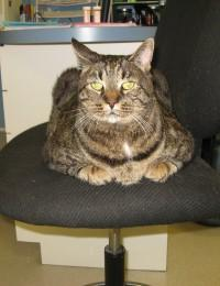 brown and black cat laying on chair