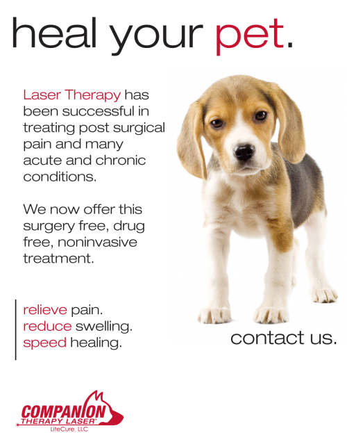 laser therapy poster with beagle puppy