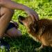 Thumbnail for Dog Bite Prevention Week